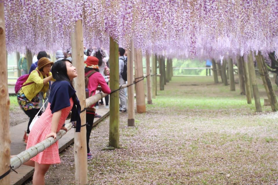 Kawachi Fuji Gardens one of the most beautiful places in Japan.