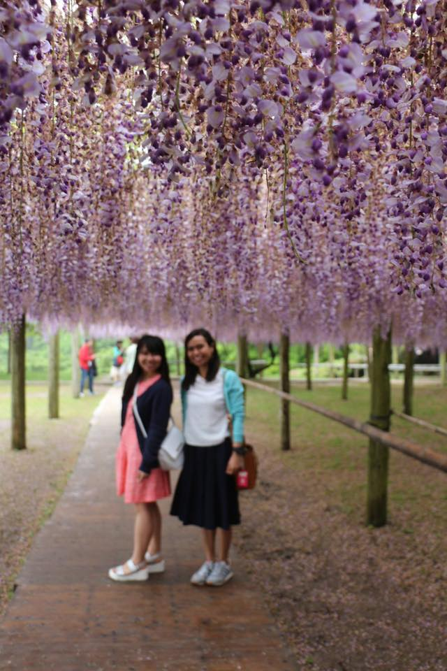 Kawachi Fuji Gardens is internationally popular, and this one  of the most beautiful places in Japan, fuji flowers or wisteria.